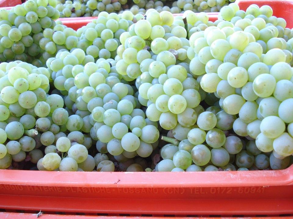 A Novello, tra Nascetta, vigne arcaiche e neogotico