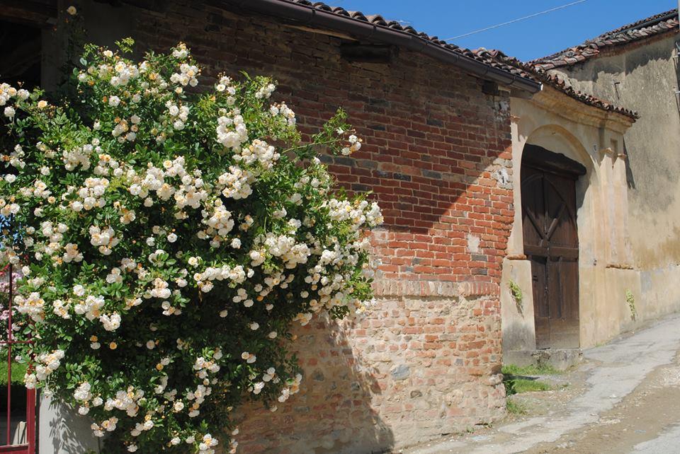 Cerreto e le rose antiche