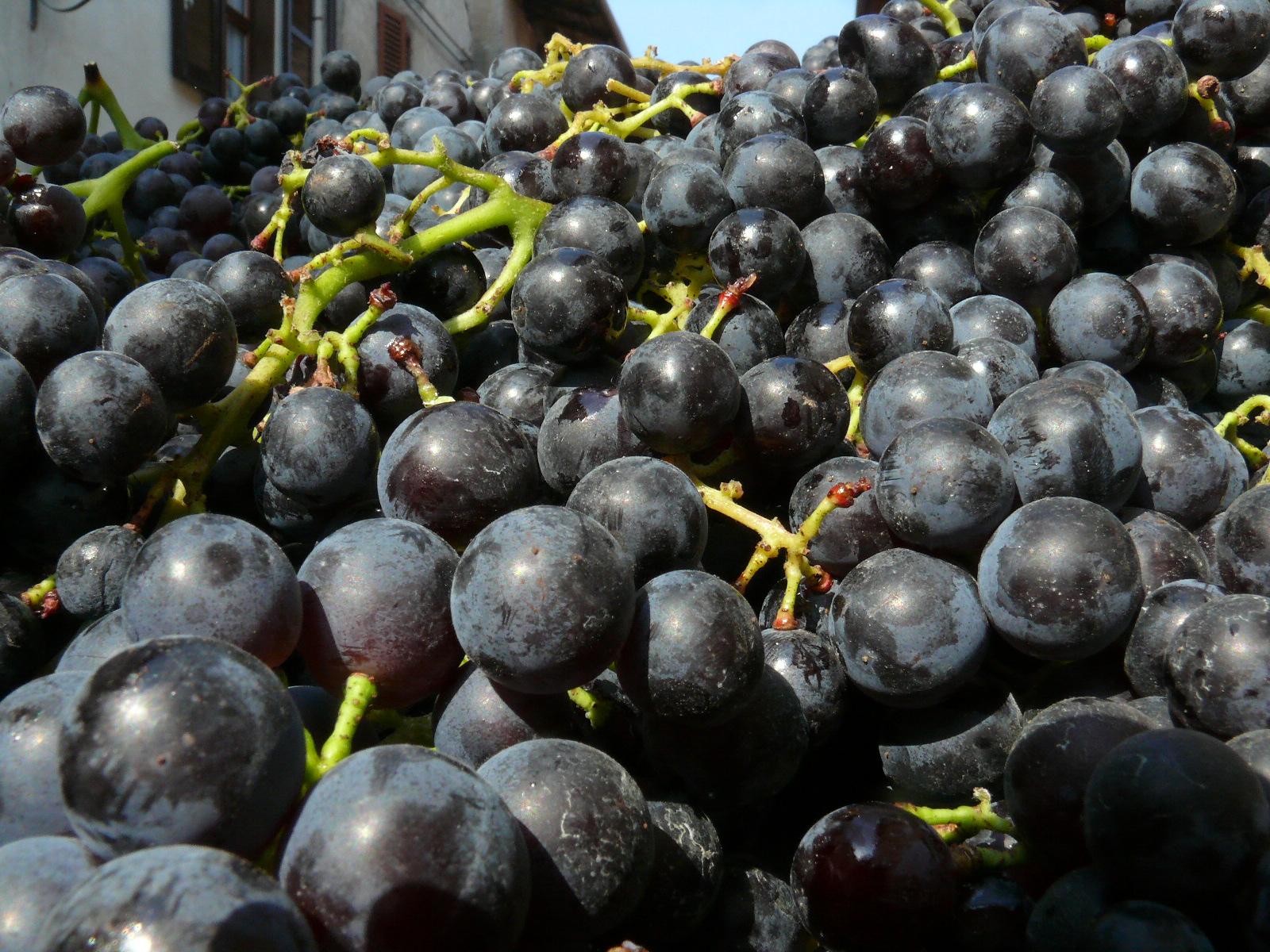 A Ghemme, dove il vino approdò in Piemonte