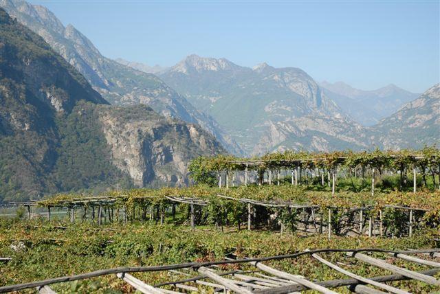 La Strada dei Vigneti Alpini: nuovo progetto per lo sviluppo dell'enoturismo di montagna tra Piemonte, Savoia e Val d'Aosta