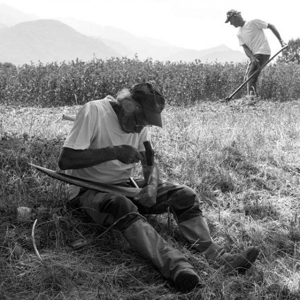 """Il progetto """"Eccellenza incontra Eccellenza"""" e le storie di FALCI, unica manifattura in Europa a produrre l'antico strumento agricolo"""