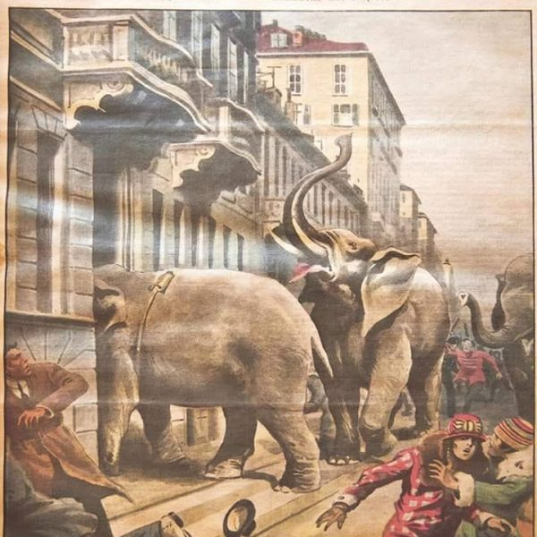 Domenica 24 gennaio 1926: cinque elefanti scorrazzano nelle vie di Torino