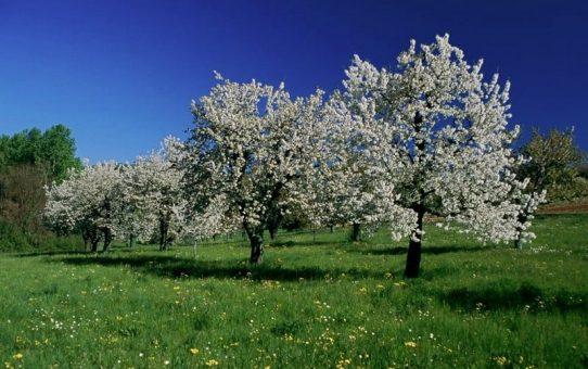 Piemonte in video: Pecetto Torinese, tra ciliegie e antichi affreschi